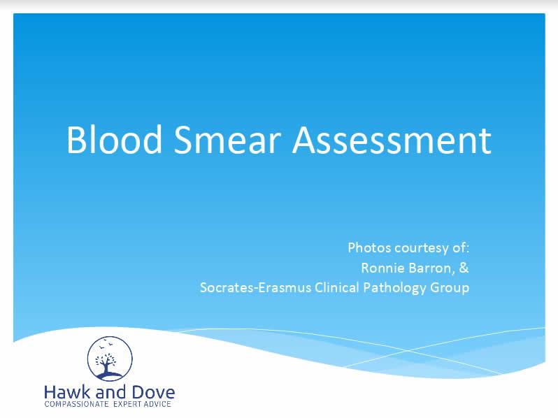 blood smear assessment